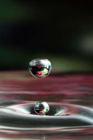 Lily Pad Water Drop