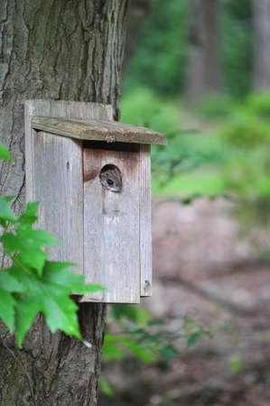 eye hole: Eastern Flying Squirrel peeking out of a birdhouse in Raleigh, North Carolina