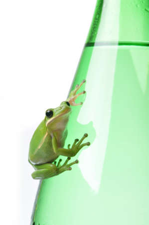 Green tree frog clinging to a glass water bottle.  metaphors for recycling, environment, freshness. Stock Photo - 15216826