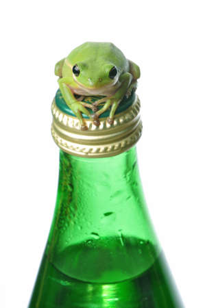 Green tree frog clinging to a glass water bottle.  metaphors for recycling, environment, freshness. Stock Photo - 15216832