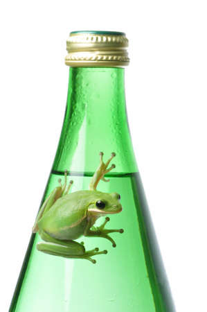 Green tree frog clinging to a glass water bottle.  metaphors for recycling, environment, freshness. Stock Photo - 15216825