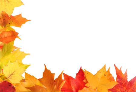秋の葉のボーダー設計白い背景の上のオレンジ色と黄色の葉を持つ 写真素材 - 15216866