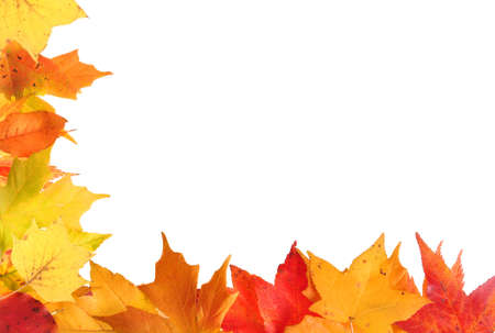 Autumn leaf border design with orange and yellow leaves on a white background Foto de archivo