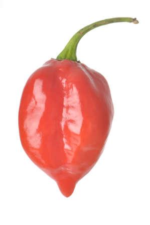 Single Caribbean Red Habanero peper geà ¯ soleerd tegen een witte achtergrond Stockfoto