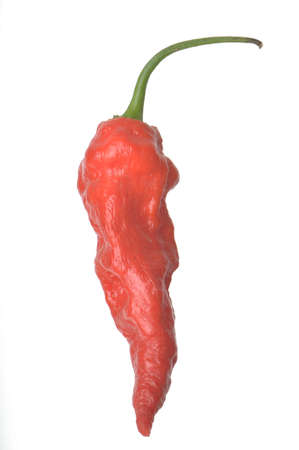 Single Ghost Pepper isolated against a white background
