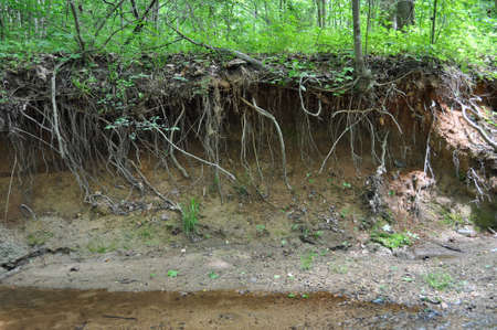 Highly eroded stream riverbank with tree roots exposed from the undercut