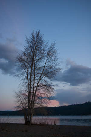 Baum am See Coeur d Alene Standard-Bild - 24694801