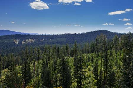 Fernan state park forrest view