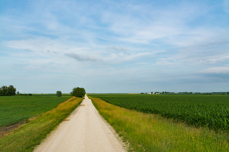 Rural dirt road in Central Illinois countryside.