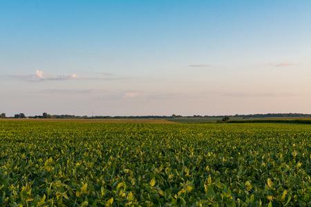 Afternoon light shining on the Illinois countryside. 版權商用圖片