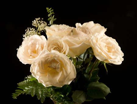 beautiful yellow roses in full bloom Stock Photo