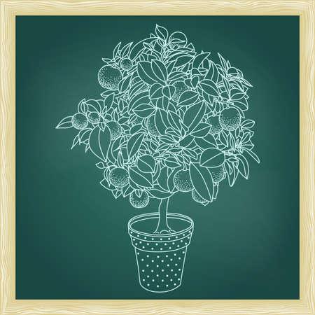 Dessin d'un arbre d'agrumes petite mandarine d'agrumes, d'orange ou de citron dans une casserole dans le style de contour. Utilisation pour l'écologie, nature, jardin, plantes, fruits thèmes. Tableau vert avec cadre.