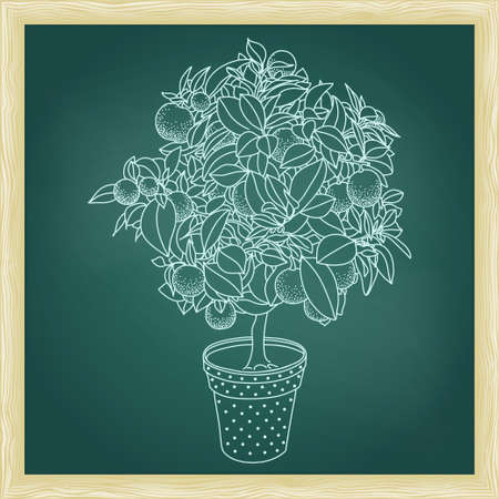 Drawing of a small citrus tangerine, orange or lemon citrus tree in a pot in contour style. Usage for ecology, nature, garden, plants, fruits themes. Green chalkboard with frame.