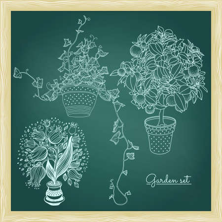 tangerine: Garden set with 3 plants in flowerpot: bluebell, tangerine and ivy. Green chalkboard with frame. Design template. 3 in 1. Illustration