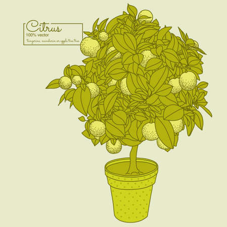 Drawing of a small citrus tangerine, orange or lemon citrus tree in a pot in contour style. Usage for ecology, nature, garden, plants, fruits themes
