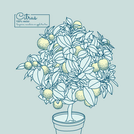 citrus tree: Drawing of a small lemon citrus tree in a pot in contour style.