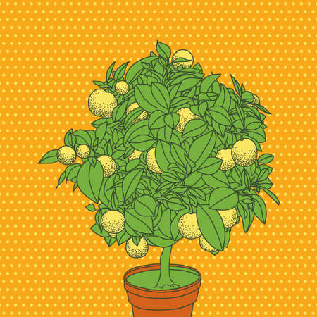 citrus tree: Lemon tangerine citrus abstract tree vector illustration Illustration