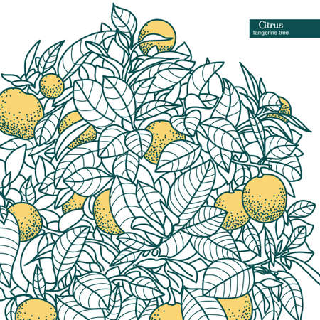 citrus tree: Drawing of a small citrus tangerine, orange or lemon citrus tree in a pot in contour style. Usage for ecology, nature, garden, plants, fruits. Illustration