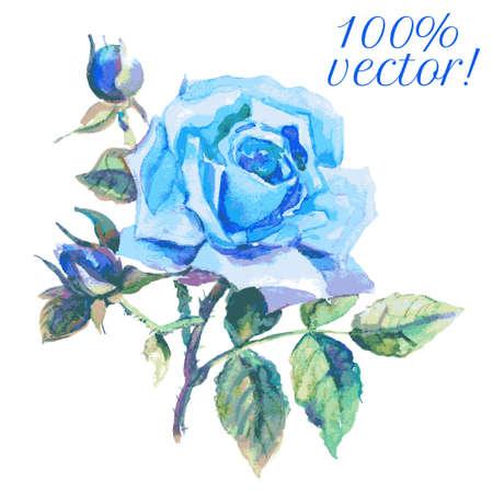 Waterverftekening van de blauwe roos. vector illustratie