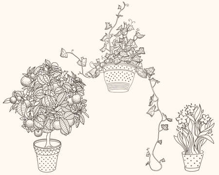 bluebell: Garden set with 3 plants in flowerpot: bluebell, narcissus and ivy. Design template in vintage style like gravure. 3 in 1