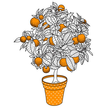Citrus tangerine, orange or lemon citrus tree in a pot in contour drawing style. Usage for ecology, nature, garden, plants, fruits themes