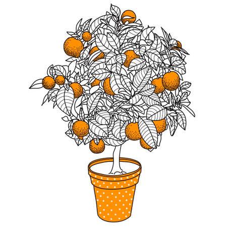 mandarina cítricos, los frutales de naranja o de limón en una olla en estilo del dibujo del contorno. Uso de ecología, naturaleza, jardín, plantas, frutas temas