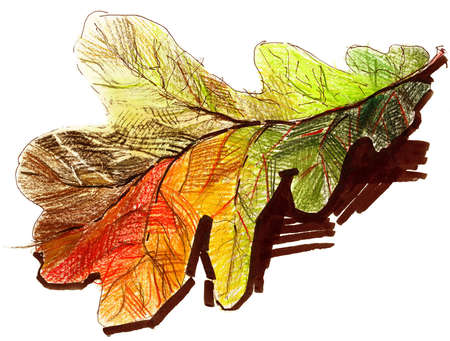 permanent: Oak leaf drawing by pencil and permanent marker. Autumn theme.