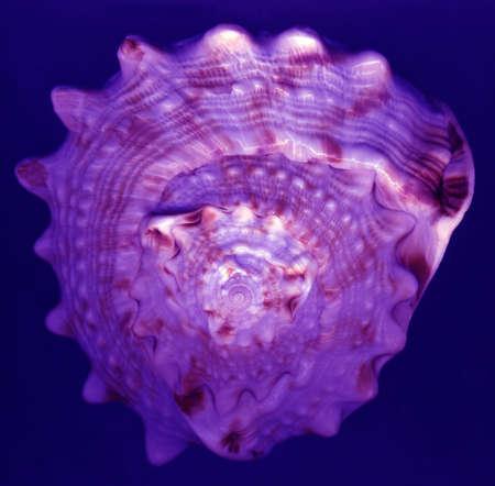 geometra: geometría sagrada sagrado en una espiral de caracol Foto de archivo