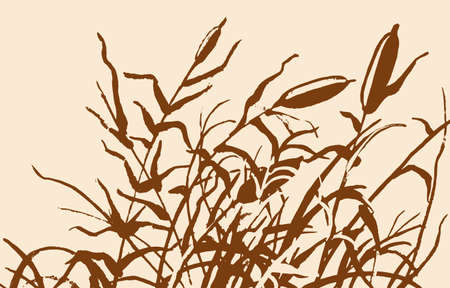 bog: Reed vector illustration. Gravure rush vector drawing.