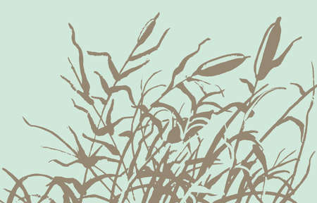 cattail: Reed vector illustration. Gravure rush vector drawing.