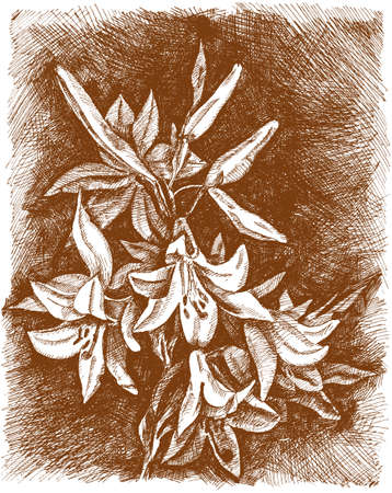 single flower: Lilies of the valley flower. Vintage engrave illustration. Lily flower vector illustration in eps. Illustration