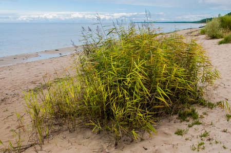 Baltic sea shore flora growing on sand Stock Photo