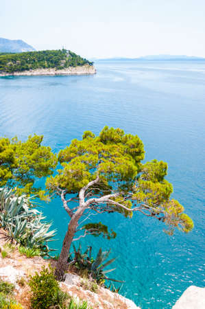 Curved pine on a rocky slope of the Adriatic coast