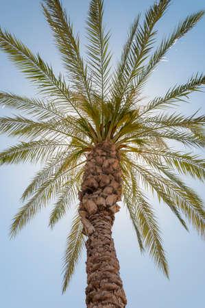 Couronne de palmier dattier en bas