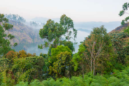 A fog covers high emerald jungles, velvet carpet of the tea plantations stretches to the horizon, rural roads are quite and empty, country people still in their beds, sun rises above the mountains.