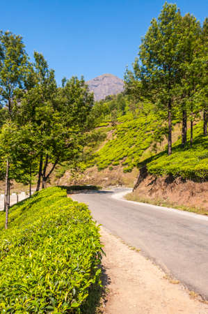 Munnar is an attractive destination with the world's best and renowned tea estates. There are more than 50 tea estates in and around Munnar. It is one of the biggest centers of tea trade in India. Imagens
