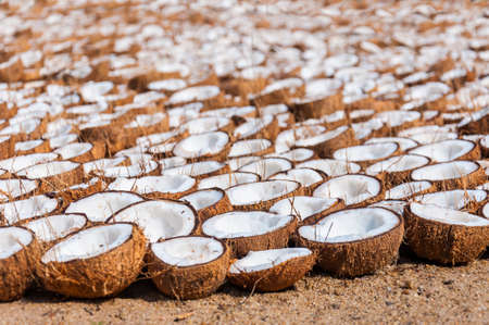 Here you can see the Indian coconut farm and their method of drying coconut halves for different purposes, like oil, flour and more.