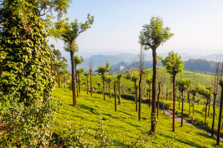Munnar is an attractive destination with the worlds best and renowned tea estates. There are more than 50 tea estates in and around Munnar. It is one of the biggest centers of tea trade in India.
