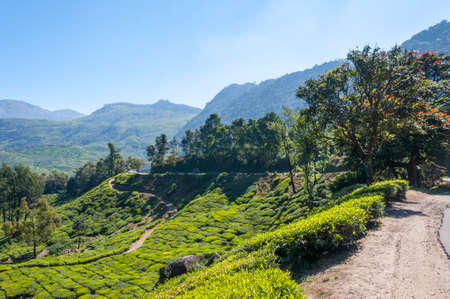 Munnar is an attractive destination with the world's best and renowned tea estates. There are more than 50 tea estates in and around Munnar. It is one of the biggest centers of tea trade in India. 写真素材