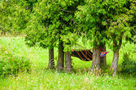 Vibrant colorful hammock hanging under rich green evergreen conifers trees on cozy forest meadow background Stock Photo