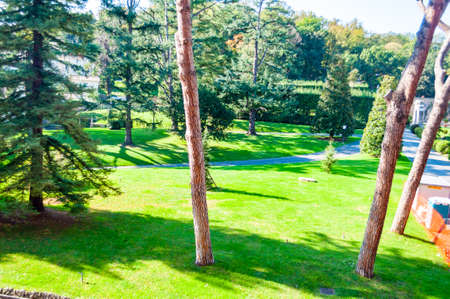 Vatican, Rome, Italy: Cozy park lawns with growing grass, pines and other evergreen trees in Vatican, Rome, Italy 写真素材