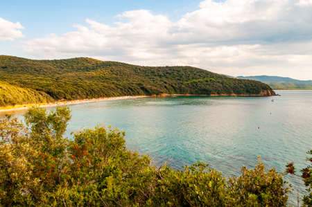 Scenic landscape view on Cala Violina beach and Tyrrhenian Sea bay surrounded by green forest in province of Grosseto in Tuscany, Italy