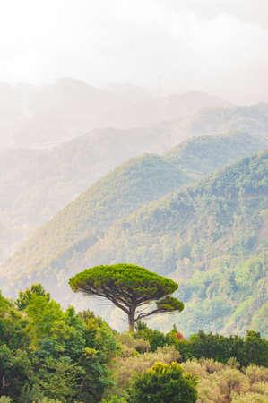 Un seul pin méditerranéen poussant au sommet de la colline. Des forêts d'arbres à feuilles persistantes remplissant la chaîne de montagnes dégradée enveloppée de brouillard. Nature italienne brumeuse.