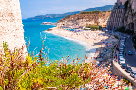 Southern plant growing on the rock on foreground and Rotonda beach full of people on the background. Sea promenade scenery in Tropea with high cliffs with built on top city buildings and apartments.