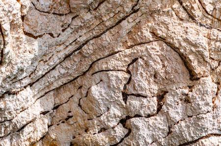 Closeup view on limestone rock texture fragment on Gargano coastline in Puglia, Italy. Rock formations example 版權商用圖片