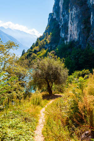 Scenic pathway leading to Garda lake shore under the dolomite mountain. Olive tree growing on beautiful meadow on wild beach of Garda lake under high rocky cliff. Scenery of Lombardy, Italy