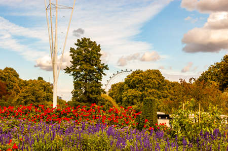 Cozy park full of vibrant blooming flowers surrounded by green growing trees and plants with London Eye far away on the background