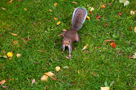 Little squirrel on the grass waiting for some food