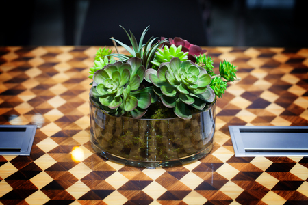 vivarium: Small beautiful tree in the glass decorate on the table