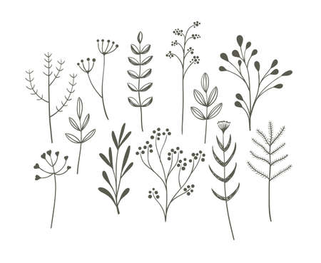 herbarium: Doodle grass set. Cute vector collection of hand drawn meadow plants. Illustration
